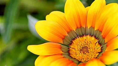i fiore i fiori edibili cosa sono quali sono e come si mangiano