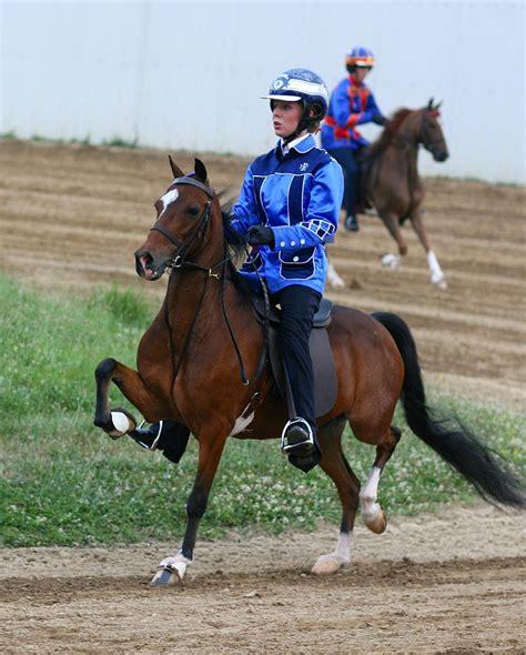 hackney horse pony brown colors bay chestnut markings