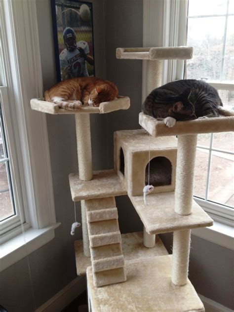 cat towers  cat houses reviewed hubpages