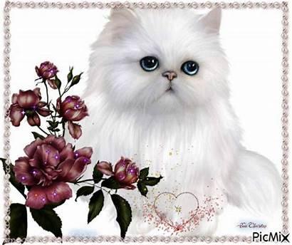 Picmix Cat Cats