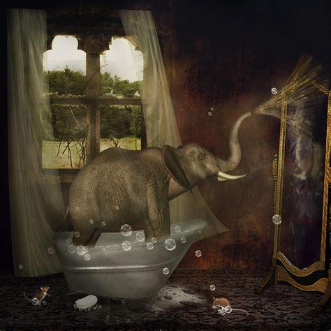 elephant  bath photograph  ethiriel photography
