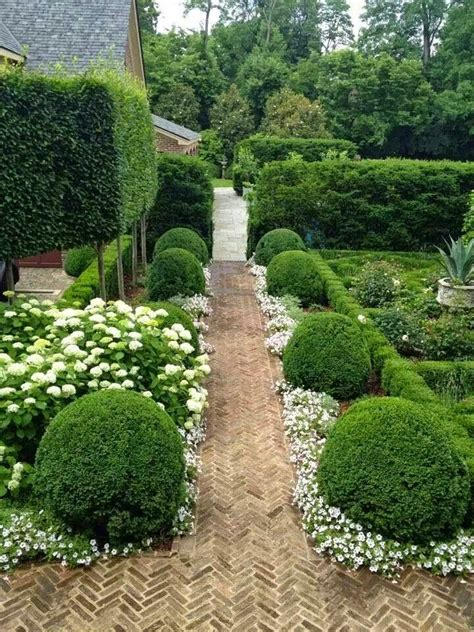 best 25 hedges ideas on hedges landscaping