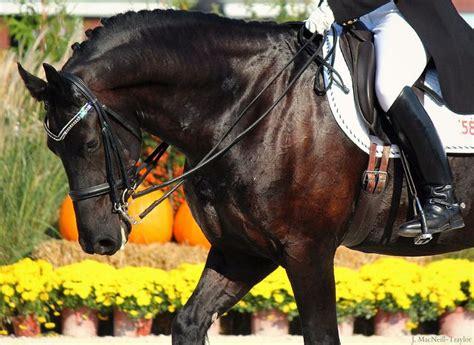 bling bridle horse