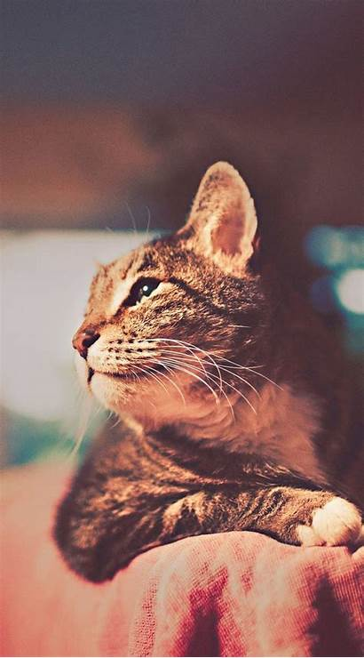 Cat Cool Iphone Retro Mobile Wallpapers Background