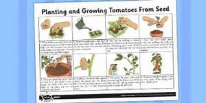 Planting Tomato Seeds Fact Sheet