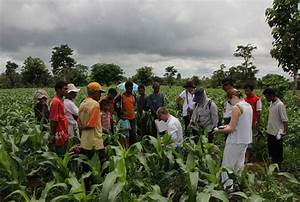 Indonesia - Biochar for Sustainable Soils