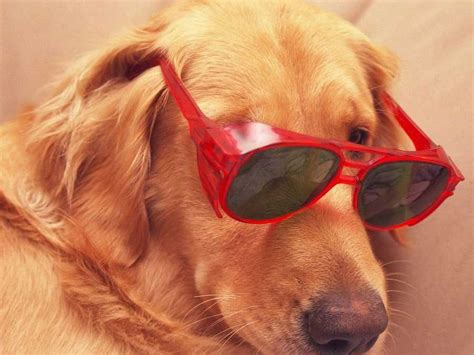 cats dogs better than reasons why pets dog pet scientific animals cool things treat businessinsider friendly thought