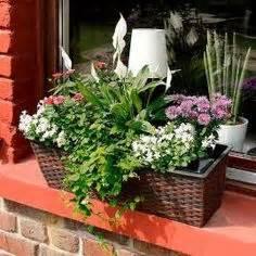 Balkonblumen Richtig Pflanzen : balkonkasten fr hling garten blumen pflanzen ideen tipps pinterest ~ Frokenaadalensverden.com Haus und Dekorationen