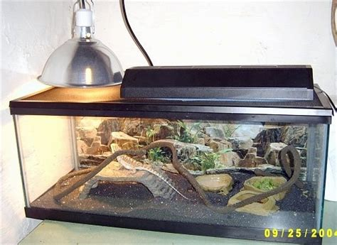 lighting for bearded dragon vivarium reptile tanks for bearded dragons reptile tanks for sale