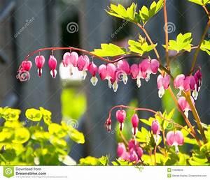 Blumen Im Garten : herz blumen im garten stockfotos bild 12948043 ~ Bigdaddyawards.com Haus und Dekorationen