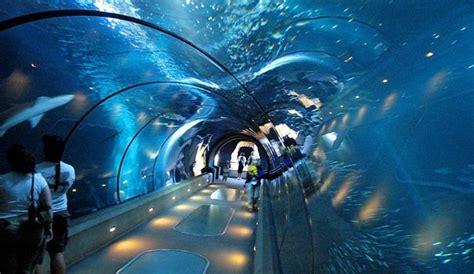 chambre hotes la rochelle en images les dix plus beaux aquariums de la planète l 39 express