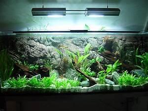 Aquarium Gestaltung Bilder : allererstes naturaquarium 540l salmlerbecken aquarium forum ~ Lizthompson.info Haus und Dekorationen