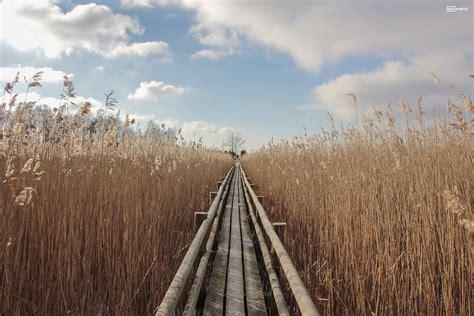 Kaņiera ezera niedrāja taka ziemā (2 foto + video) - Latvijas skatkartes