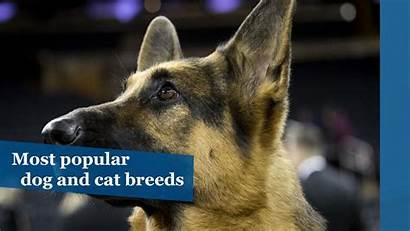 Cat Dog Breeds Popular Pets