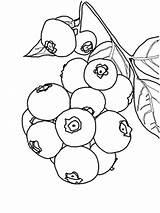 Kolorowanki Jagoda Dzieci Dla Coloring Blueberry sketch template