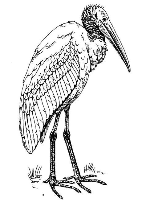 disegno da colorare ibis cat