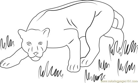 panther coloring page  panther coloring pages coloringpagescom