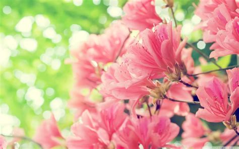 Spring Flowers Wallpaper  2560x1600 #66695