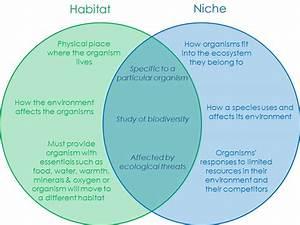 Easy Ecology