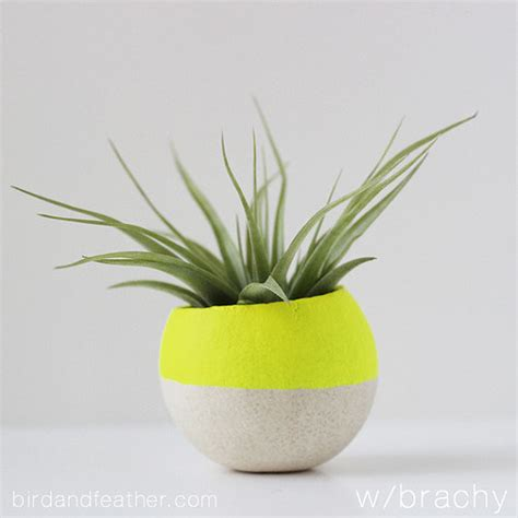 contemporary pot plants neon yellow air plant pot with air plant by bird and feather co contemporary indoor pots