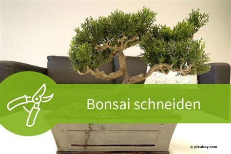 bonsai äste schneiden bonsai schneiden mit 6 schnitten zur asiatischen gartenkunst
