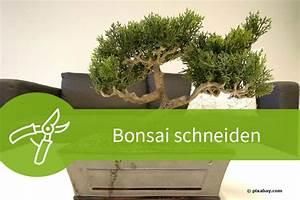 Wann Heidelbeeren Pflanzen : liguster wann pflanzen liguster schneiden anleitung liguster so pflanzen und schneiden sie die ~ Orissabook.com Haus und Dekorationen