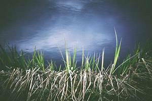 Wann Wird Lavendel Geschnitten : schilf schneiden wann wie viel und wie ~ Lizthompson.info Haus und Dekorationen