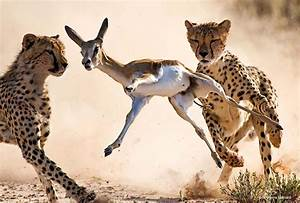 Women In Wildlife Photography