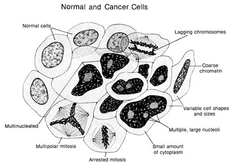 Beautiful Biological Questions