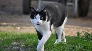 Kann Der Vermieter Katzen Verbieten : katzensprache verstehen das bedeutet die k rpersprache ihrer katze ~ Buech-reservation.com Haus und Dekorationen