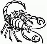 Scorpion Coloring Pages Drawing Cartoon Animals Sheet Printable Animal King Town Getdrawings Clipartbest sketch template