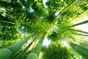 Bambus Im Garten Vernichten : pfifferlinge z chten so wird die zucht zum erfolg ~ Michelbontemps.com Haus und Dekorationen
