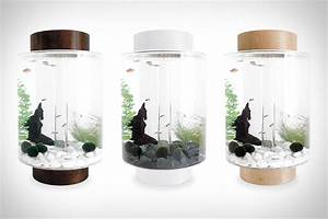 188 best images about Aquariums, Fish Bowls and Fish Tanks ...
