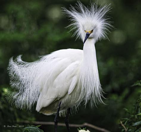 Snowy Egret - Killer Hats