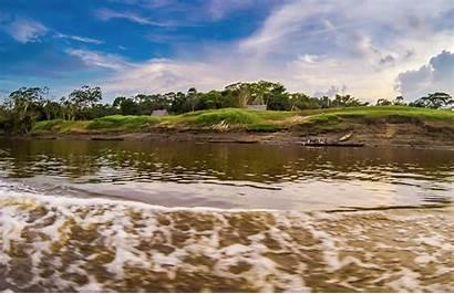 Dry Season Wet River Rainforest Jungle Plant