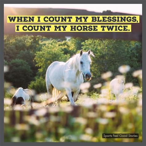 horse quotes  unharness  spirits sports feel