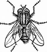 Coloring Insect Fly Clip sketch template