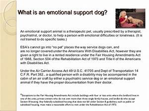 service dogs therapy dogs emotional support animals With doctor s letter for therapy dog