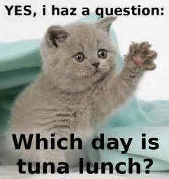 Funny Cat Memes Lunch