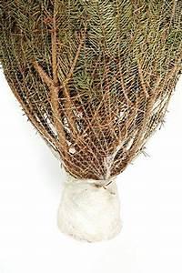 Künstliche Weihnachtsbäume Kaufen : echter weihnachtsbaum nordmanntanne h ca 145 160 cm premiumqualit t frisch geschlagen ~ Indierocktalk.com Haus und Dekorationen