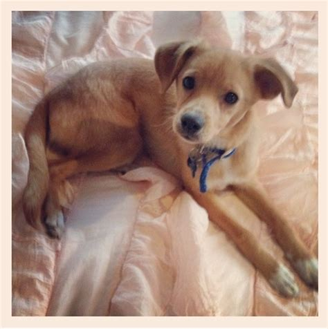 lay on the bed and gimme image toulouse lying on the bed jpg grande wiki