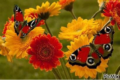 Gerbera Flowers Orange Daisy