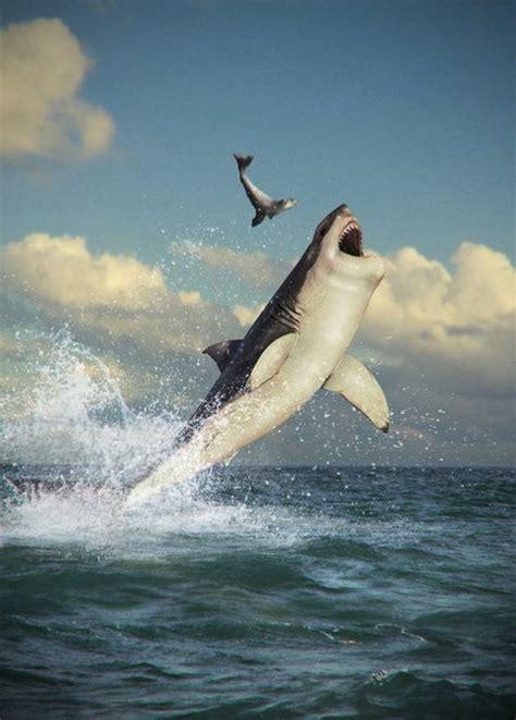 shark  mammal  fish  answers