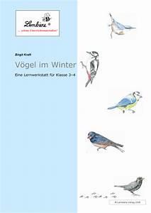 Vögel Im Winter Kindergarten : arbeitsblatt vorschule tiere im winter grundschule ~ Whattoseeinmadrid.com Haus und Dekorationen