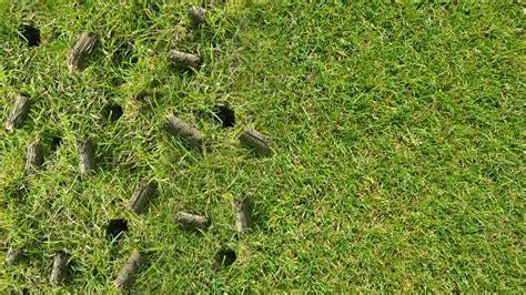lawn aeration aeration cleancutlawn