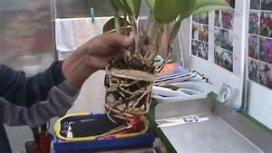 Orchideen Umtopfen Video : orchideen pflege 1 cattleya umtopfen und teilen youtube ~ Watch28wear.com Haus und Dekorationen