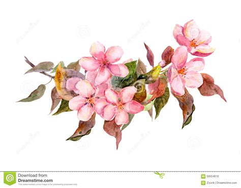 Blossom Branch With Pink Flowers Watercolor Stock