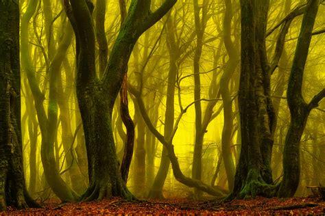 Return To The Magical Forest — Lars Van De Goor