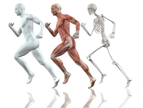 anatomie en cours