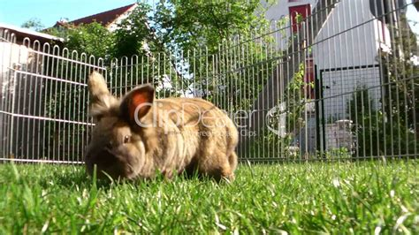 Zwei Hasen Im Garten Lizenzfreie Stock Videos Und Clips